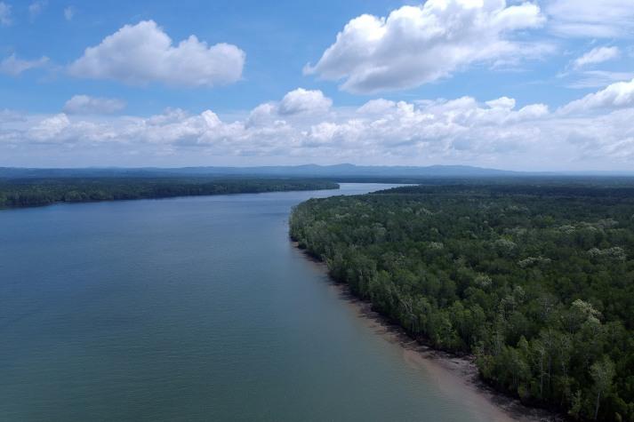 Foto Udara kawasan hutan manggorve di Teluk Bintuni, Papua Barat, Selasa, 2 April 2019. Hutan manggrove di kawasan Teluk Bintuni Barat memiliki keaneka ragaman hayati yang sangat beragam, ke-2 terbesar setelah hutan manggrove di kawasan Amazon, Brazil. - JP/Jerry Adiguna